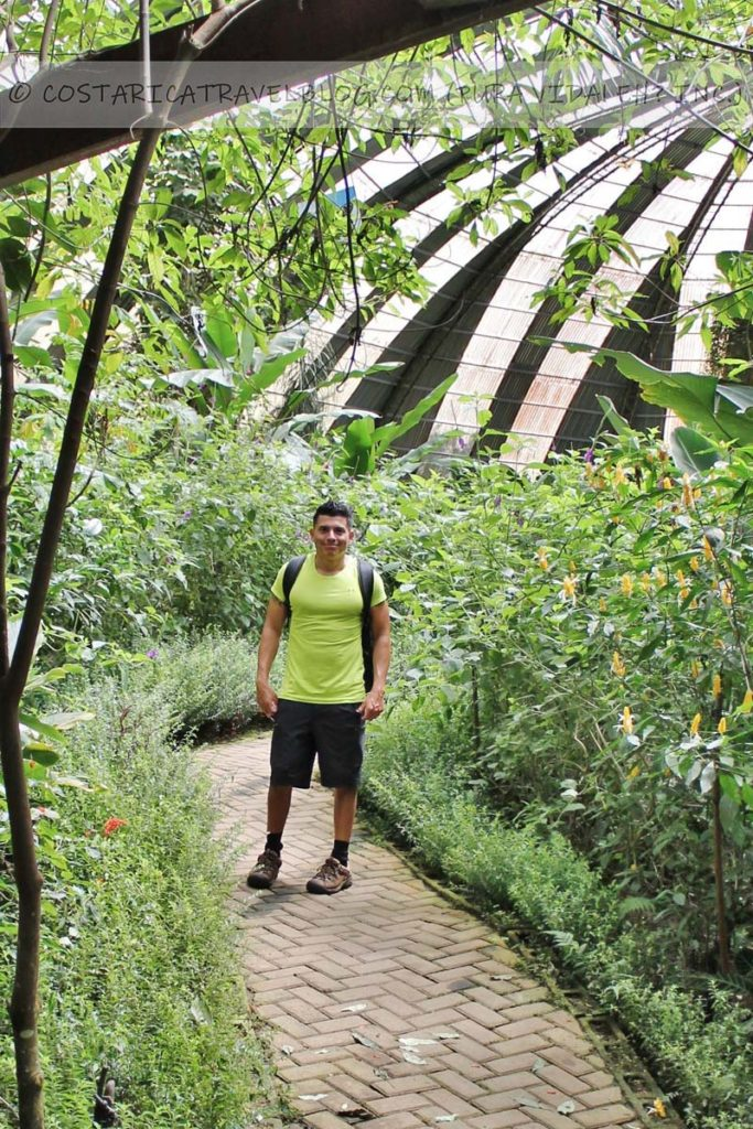 Ricky; butterfly garden at the Selvatura Park