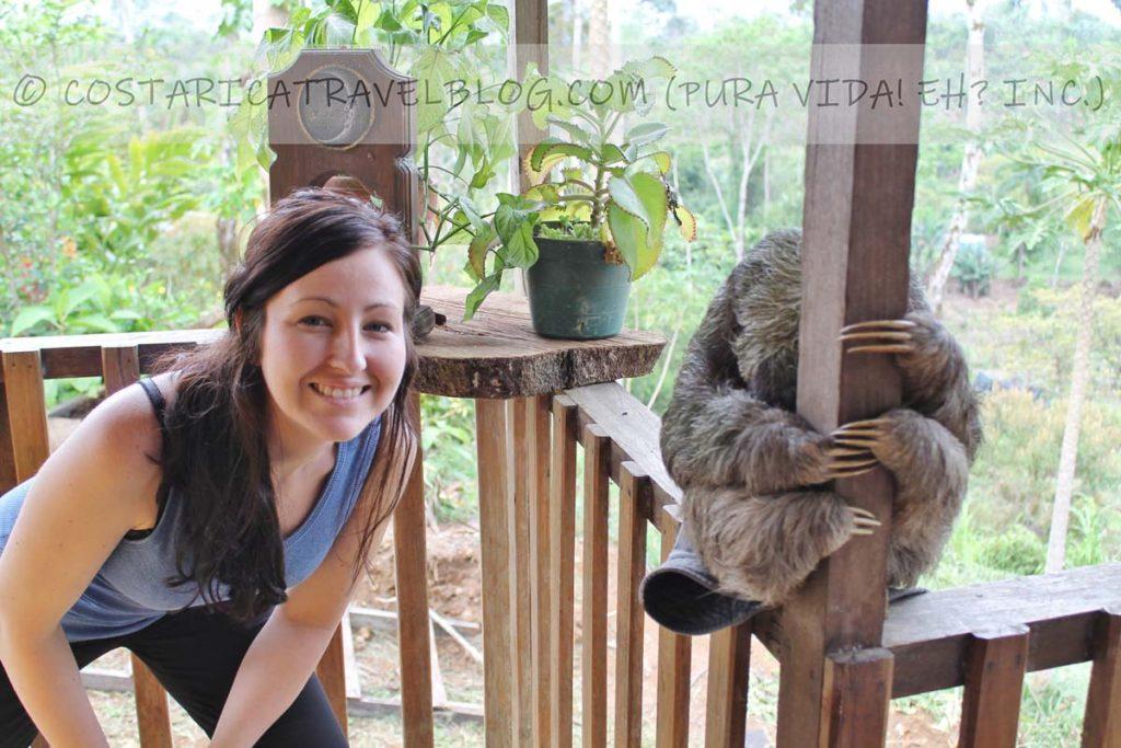 Nikki; with a sleepy sloth